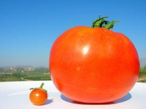 Picture of a large tomato and a small tomato, symbolizing preferred stock and common stock
