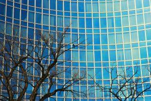 Picture of tree branches in front of an office building, symbolizing a branch office